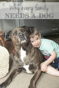 bg_needs a dog
