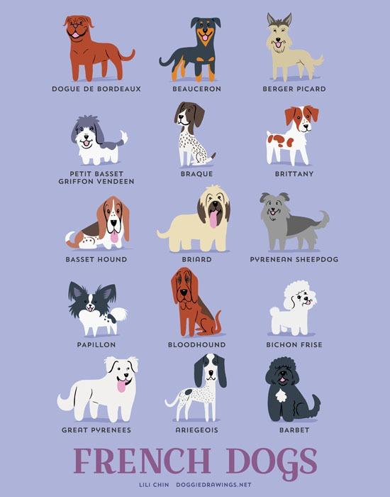 Lili chin dogs