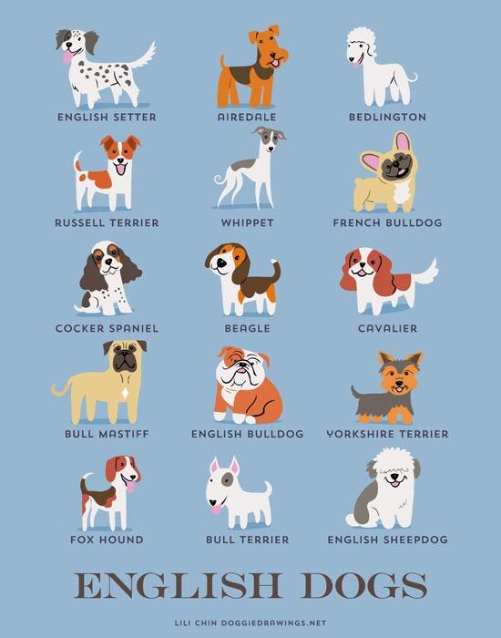 lili chin dogs2