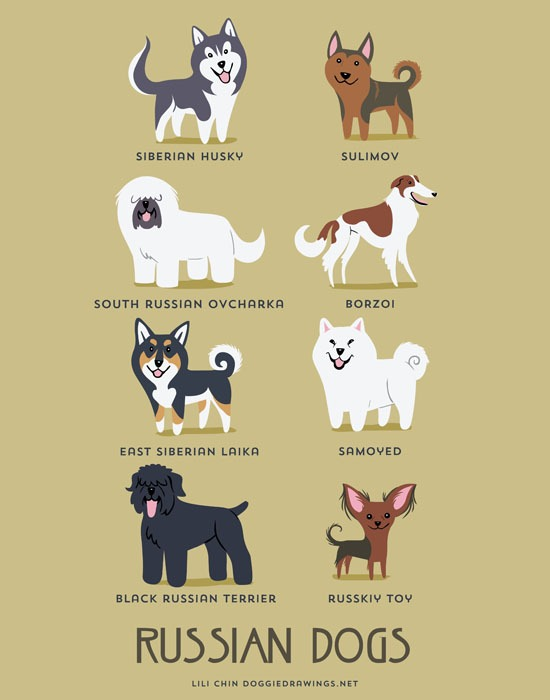 lili chin dogs3
