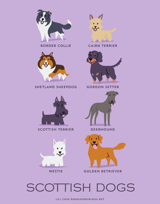 lili chin dogs5